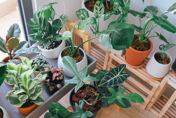 Green leaf potted indoor plants