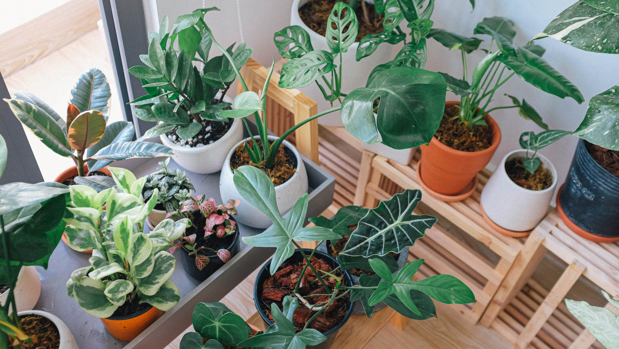 How To Choose The Right Indoor Plants